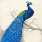 厂家直销数字油画4050雀之灵一 手绘装饰画批发定制